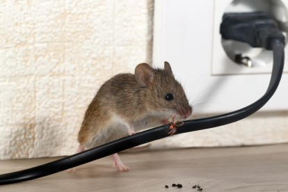 Pest Control in Bethnal Green, E2. Call Now! 020 8166 9746