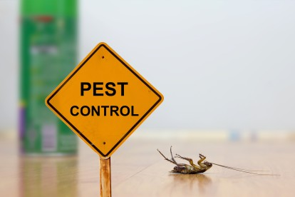 Pest Contol in Bethnal Green, E2. Call Now 020 8166 9746