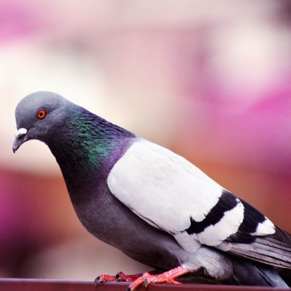 Birds, Pest Control in Bethnal Green, E2. Call Now! 020 8166 9746
