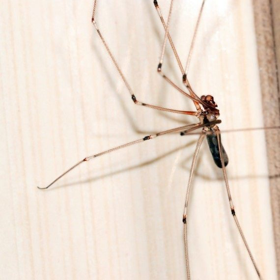 Spiders, Pest Control in Bethnal Green, E2. Call Now! 020 8166 9746